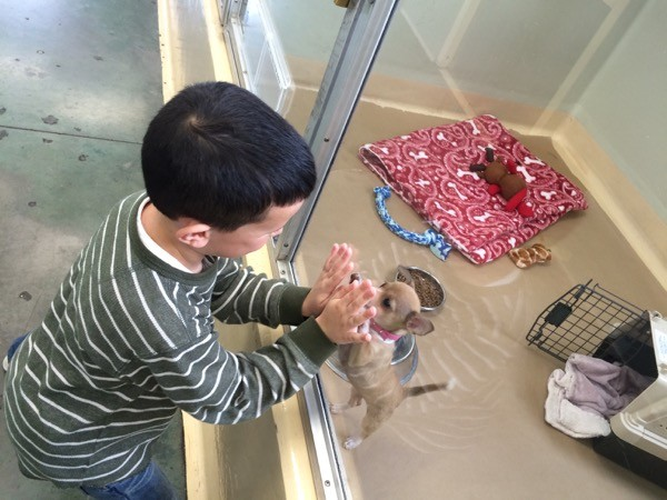 A child playing with a cute adoptable puppy.