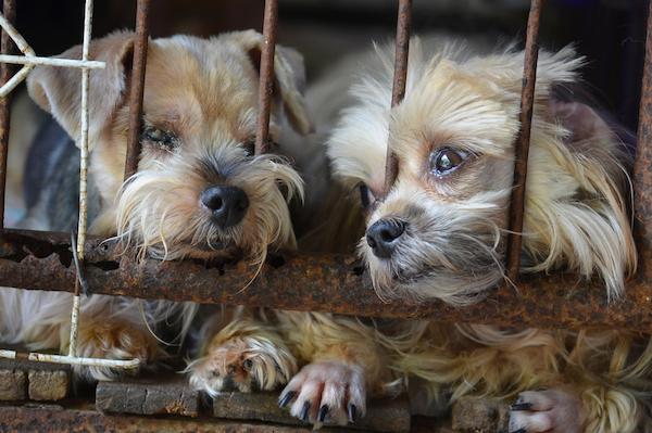 Puppy Mills - Dogster