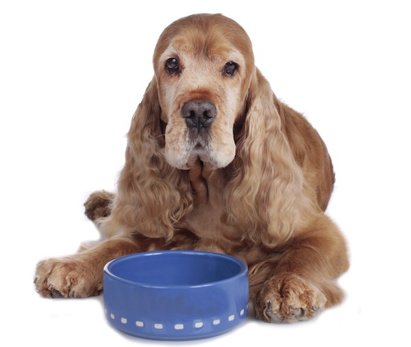 What should you feed an older dog?