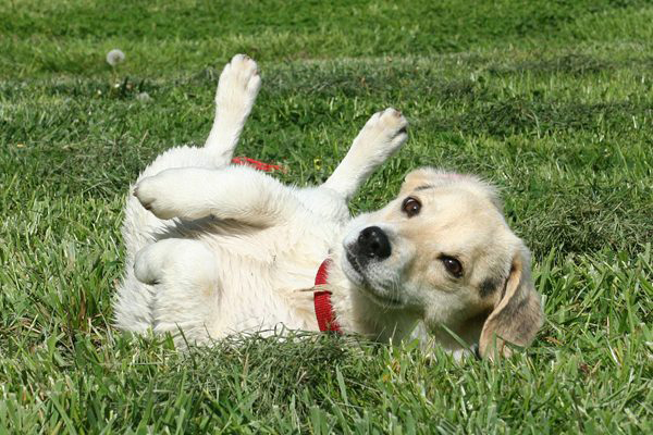 All About Dog Genitalia And Dog Reproductive Systems