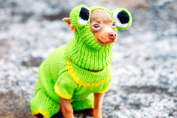 cutest dog halloween costumes