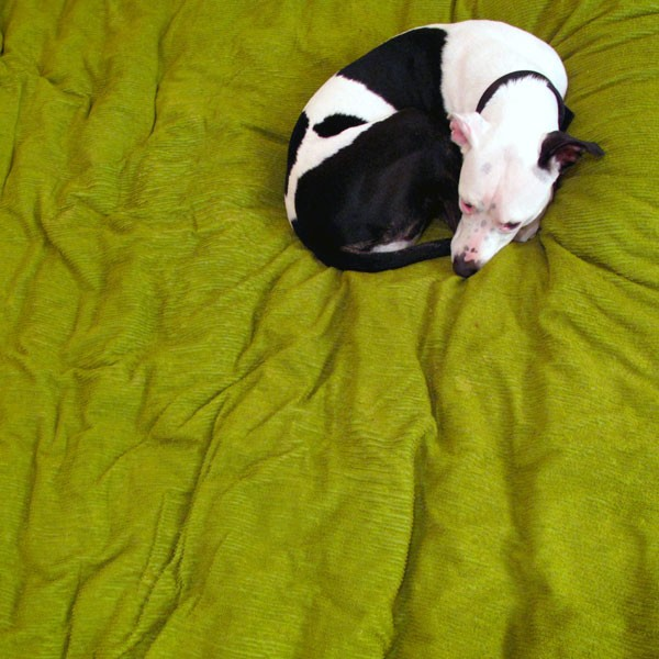 A dog on a green bed asleep.
