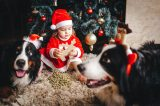 Child with dogs in front of Christmas tree.
