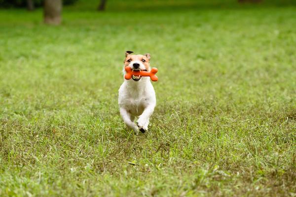 Dog Eats Chicken Bones What To Do