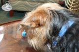 Tucker is mesmerized by the spinning dreidel.
