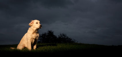 about acepromazine dog tranquilizer
