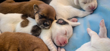how long do puppies sleep