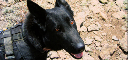 Retired Navy Seal Dog Chopper Gets His Own Smithsonian Tv