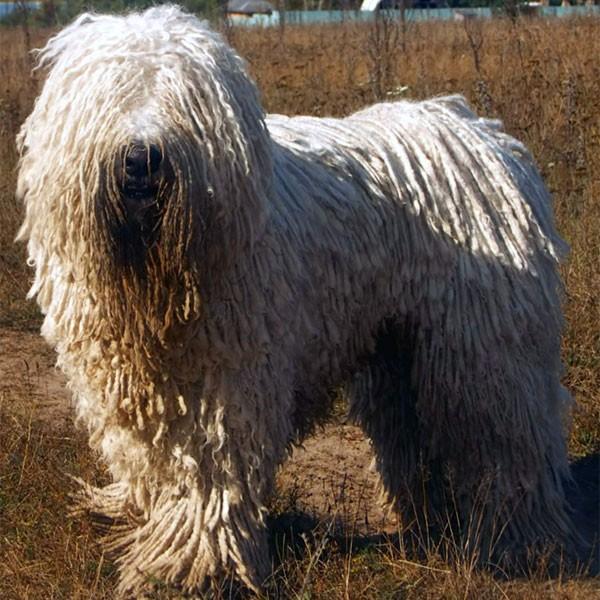 unique kinds of dog breeds