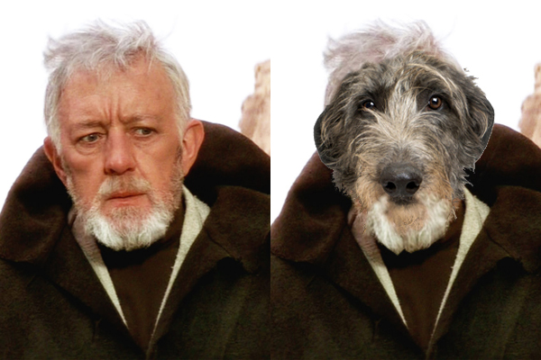 Dogs of Star Wars Scottish deer hound as Obi-wan Kenobi