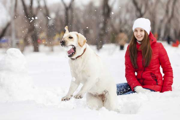 A dog with a snowball.