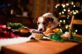 A dog eyes some holiday treats.