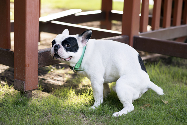 causes of abnormal dog stool