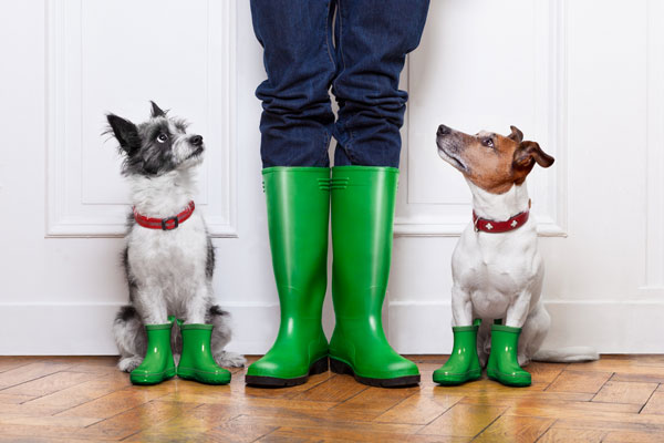 Dogs and a human in wellies, getting muddy.