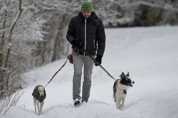 A man walking his dogs in the snow.