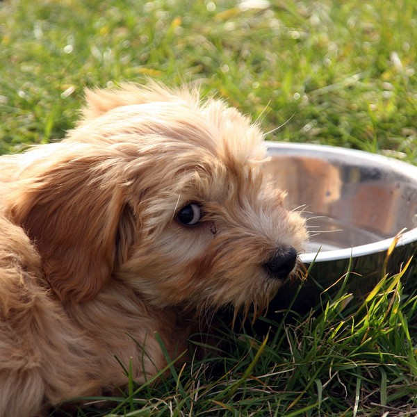A dog outside sitting near his bowl.