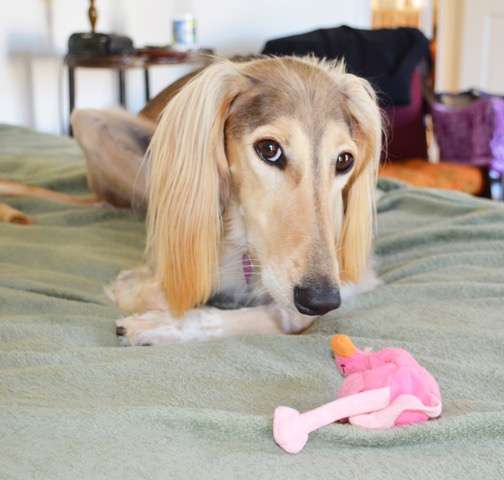 Chloe and her soft flamingo toy. Photography by Cori Solomon.