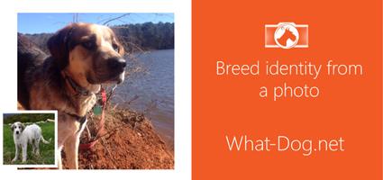fetch app what dog