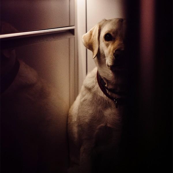 what happens when my dog eats ibuprofen?