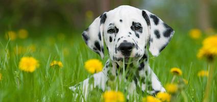 5 Tips For Training A Deaf Dog