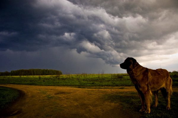 A dog looking out at stormy weather.
