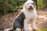 Me at the park by Shutterstock. See how happy I look?