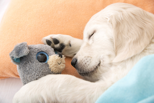 A puppy sleeping in a bed with a stuffed animal.