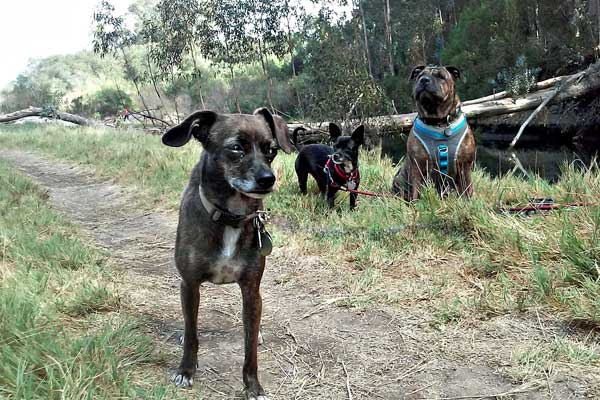 Small Breed Of Dogs Named After An Island