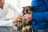 Dog getting vaccinated at the vet by Shutterstock.