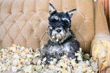 causes of abnormal dog behavior