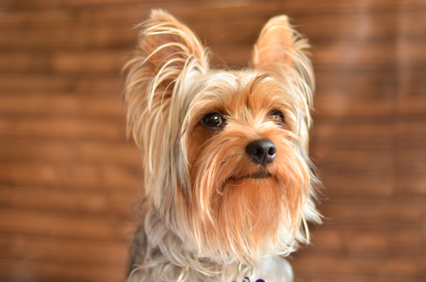 10 Best Apartment Dogs (Small To Large)