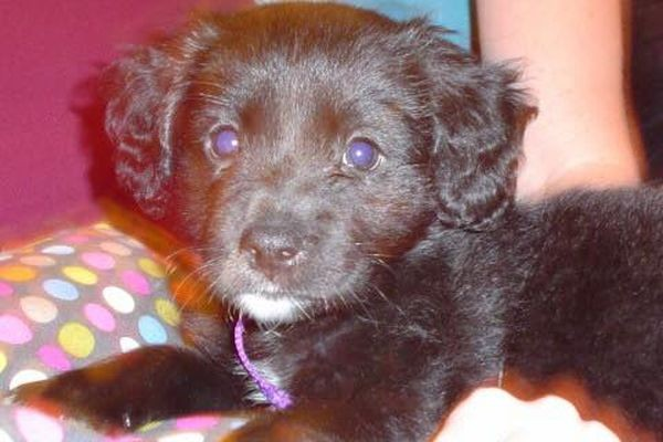 Belle as a puppy. Photo by Terry Kaye
