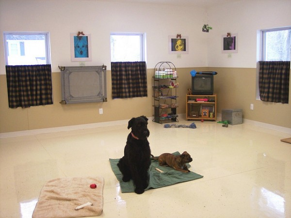 Do you want to teach classes? Private sessions? Both? Photo Credit: acme canine