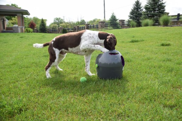Photo by Raygan Swan, Charlie further investigates the launcher when left to his own devices.