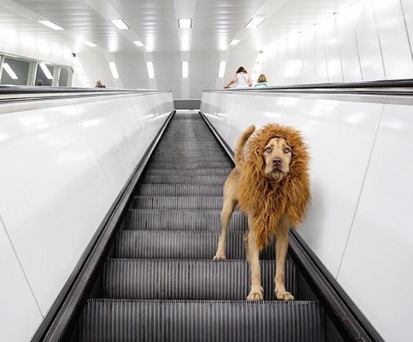 LionDog2