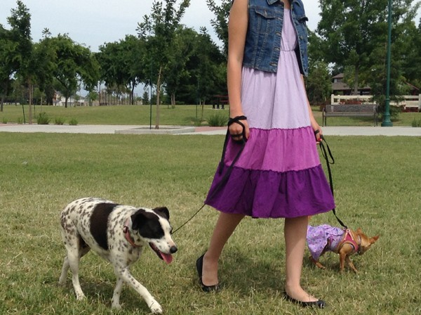 Matilda Cow leash walking