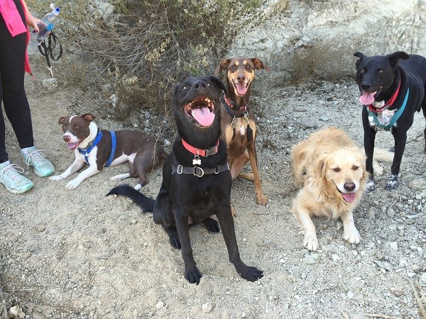 Happy hikers! Beaux, Huxley, Shadow, Asscher, and Riggins (Photo by Wendy Newell)