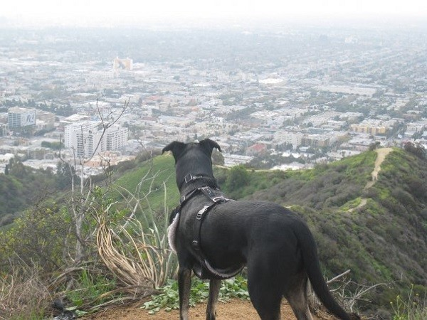 Looking over Hollywood (Photo by Wendy Newell)