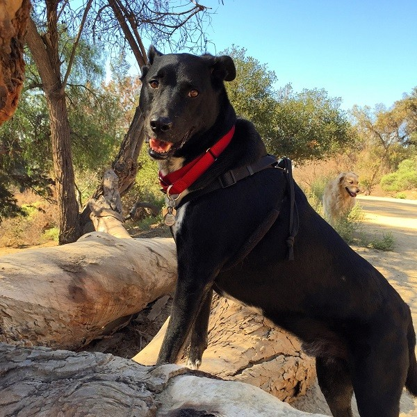 Riggins' signature hiking pose. I have dozens of pictures with his feat up on a rock or tree trunk. (Photo by Wendy Newell)