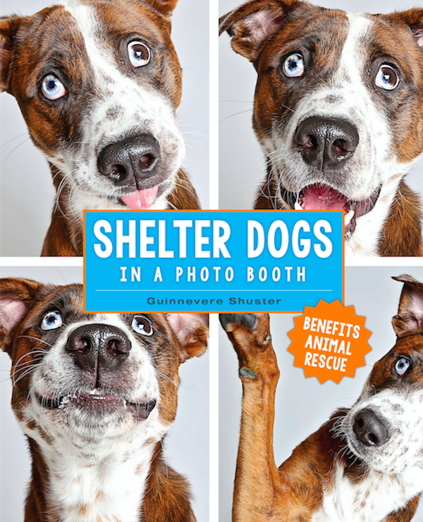 ShelterDogsCover