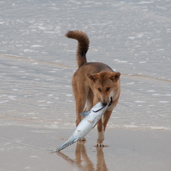 can dogs eat seafood
