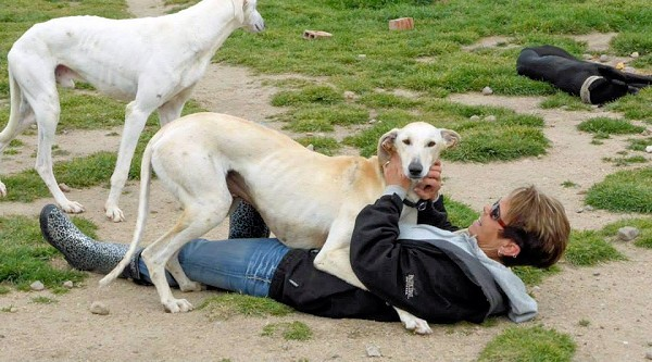 Galgos dogs playing with woman