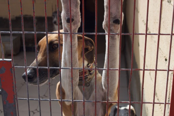 galgos-at-scooby(1)