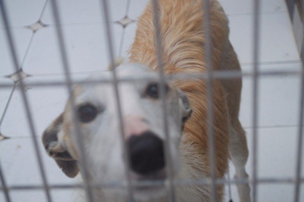 galgos-at-scooby(3)