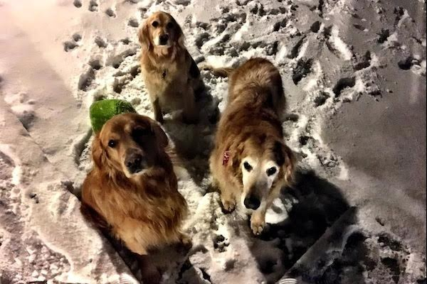 My own dogs (Photo courtesy James Rollins)