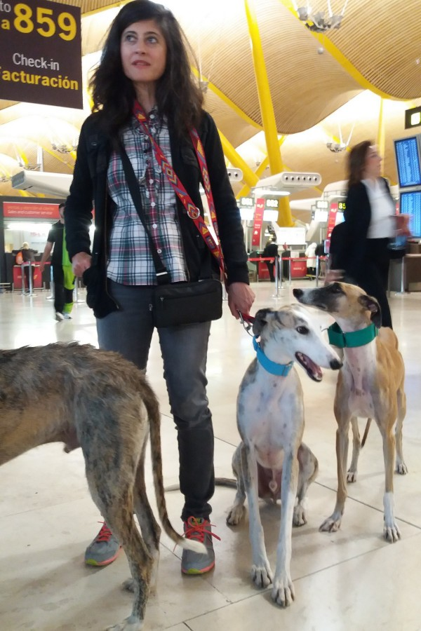 Scooby Volunteer & rescued Galgos at Madrid Airport