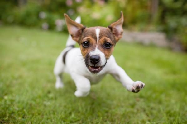 Puppy by Shutterstock.
