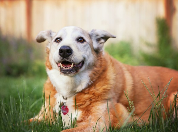Senior dog by Shutterstock.