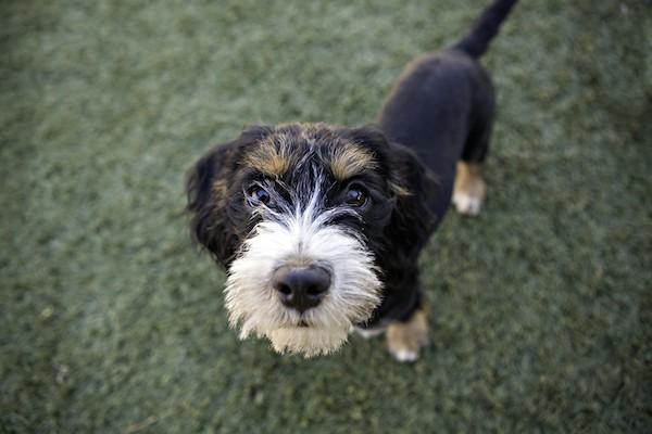 Begging dog by Shutterstock.