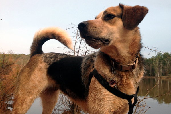 why do dogs wag their tails